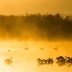 朝靄の写真(PHOTOHITOより)