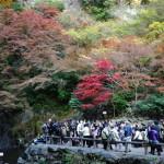 箕面の滝の紅葉
