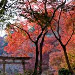 延命寺の紅葉