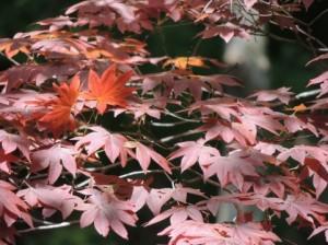 光を反射して色がキレイにでていない紅葉
